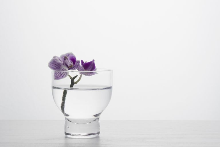 simple-simplicity-orchid-Kristin-Lee.jpg