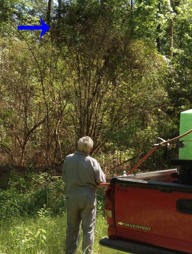 Foliar Tree Herbicide Application