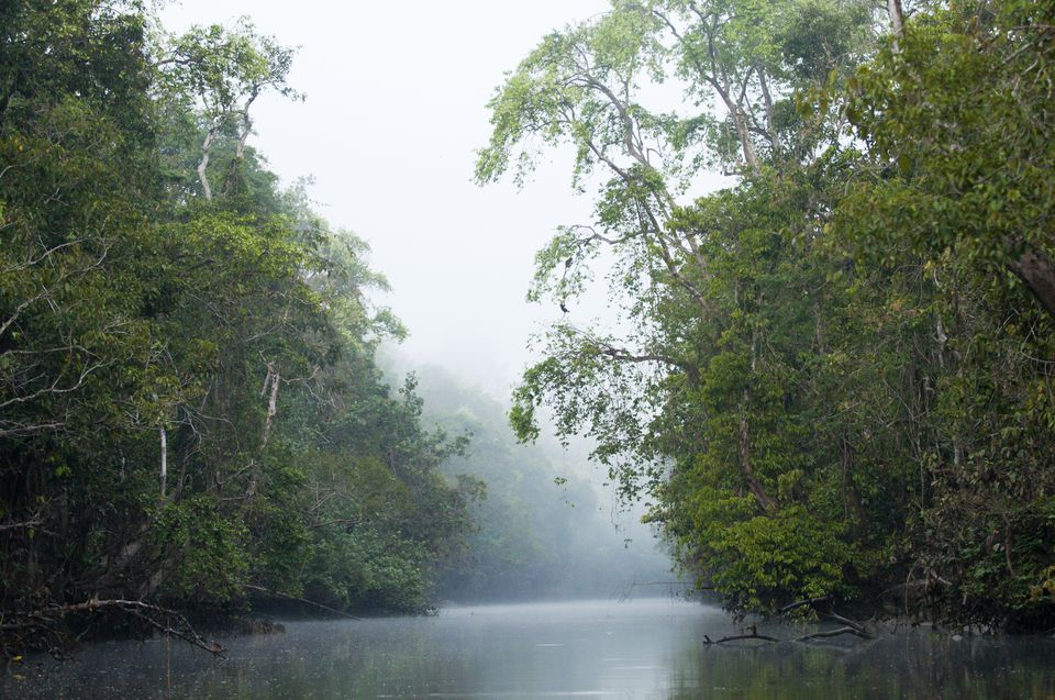 Morning mist on Menanggol tribituary of Sungai Kinabatangan