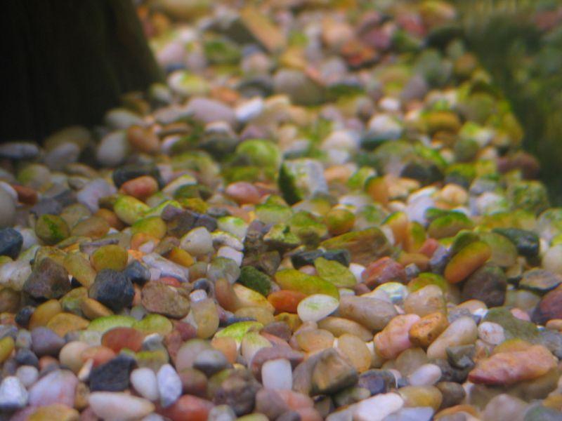 Algae on Substrate