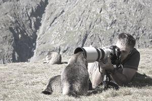 Man taking photograph of Alpine Marmots
