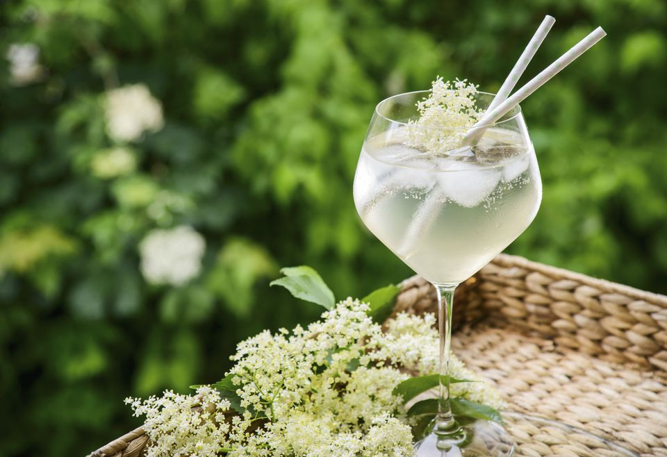 Elderflower Cocktail with Fresh Elderflowers in a Spring Garden