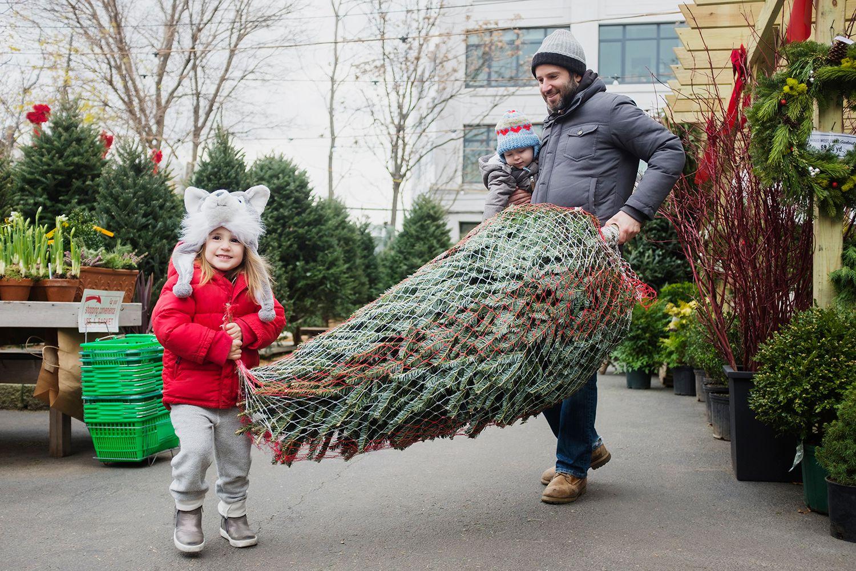 Cut Your Own Christmas Tree Minnesota