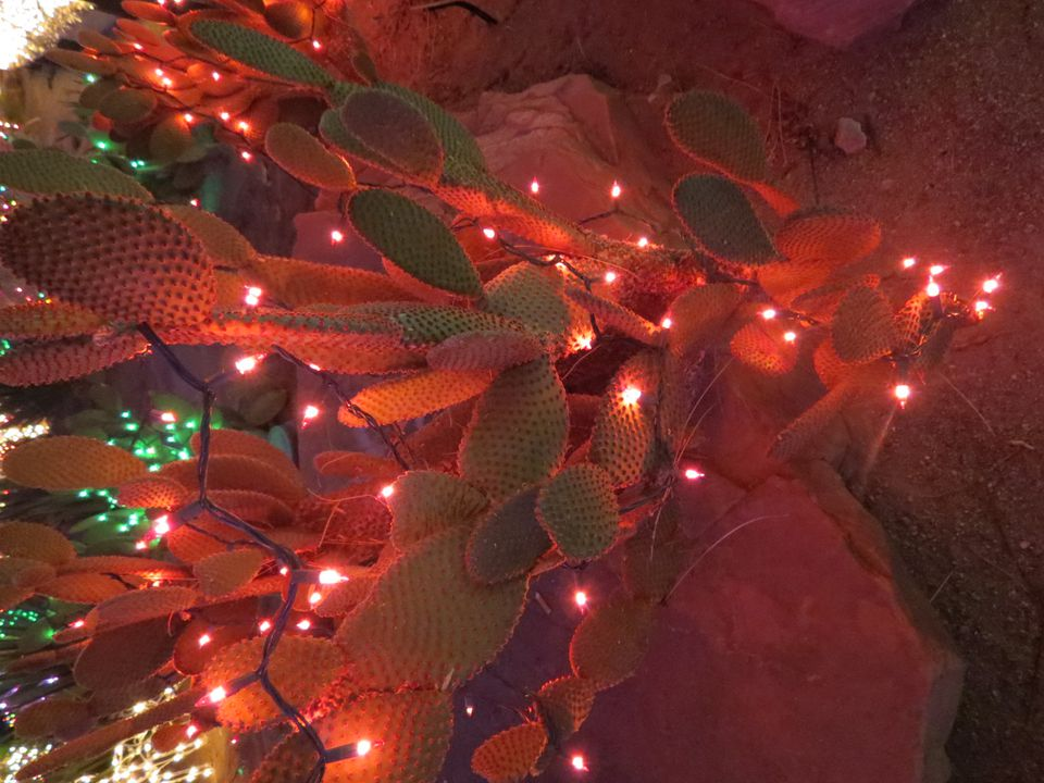 Using net lights in your outdoor lighting lighted cactus for christmas mozeypictures Images