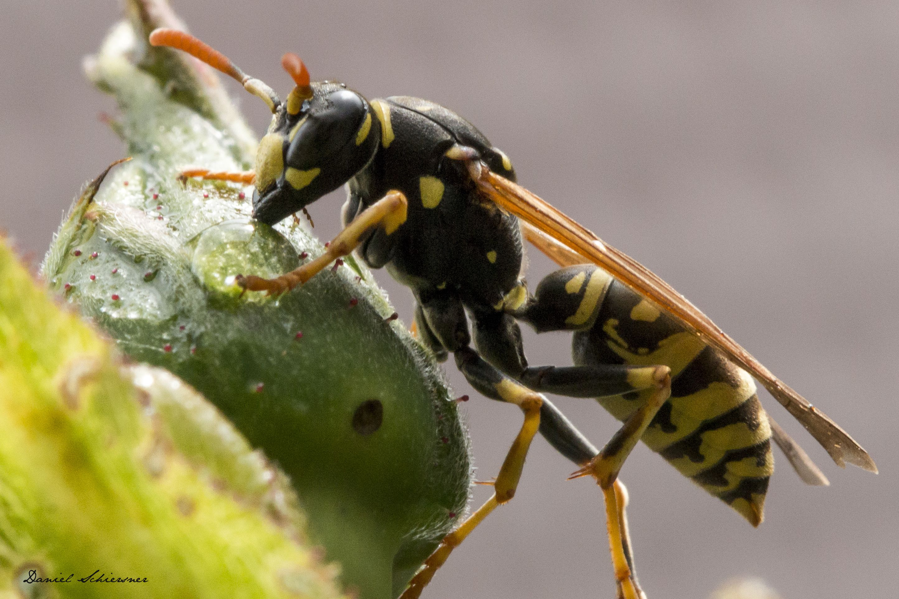 Habits And Traits Of Ants Bees Wasps