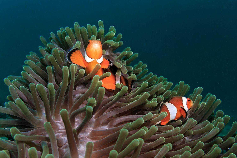 Best Small Clownfish Food