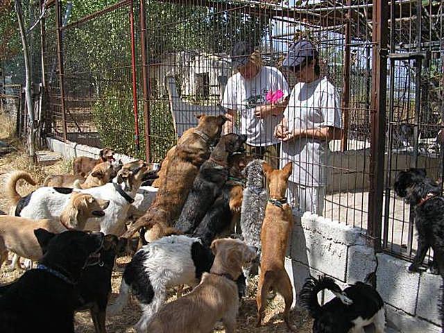 Estos voluntarios les dan de comer a los perros.