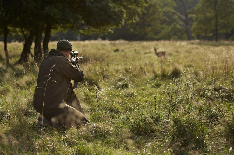 Male hunter aiming at deer with rifle