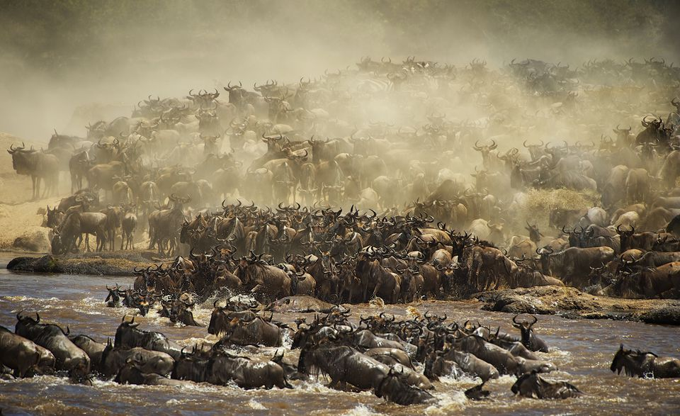 Africa's Unmissable Natural Events Wildebeest Migration