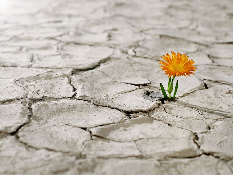 Flower growing in cracked dried mud