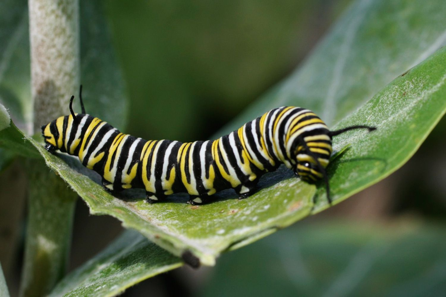 10 Fascinating Facts About Caterpillars