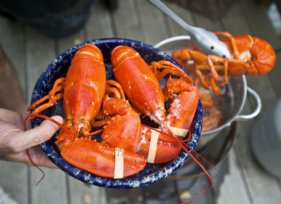 Fresh Maine lobsters are prepared in Bar Harbor, Maine.