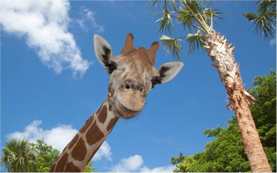 NaplesZoo_giraffe.jpg