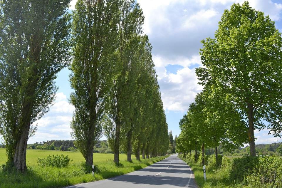 A set of columnar trees