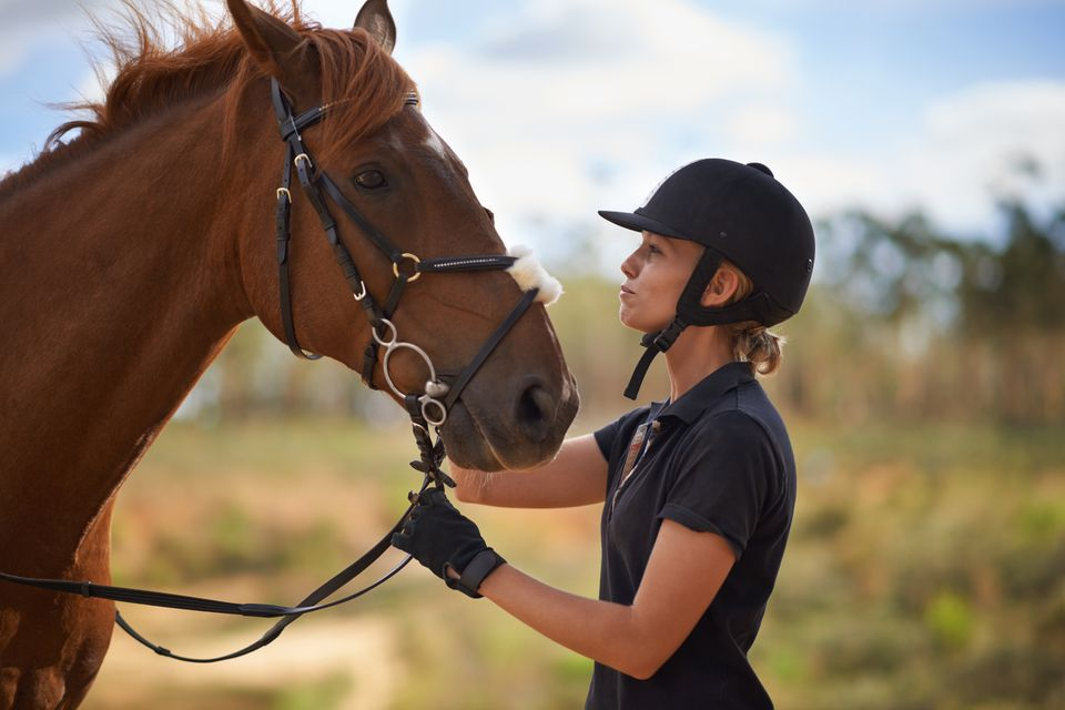 The best horse breeds for new riders