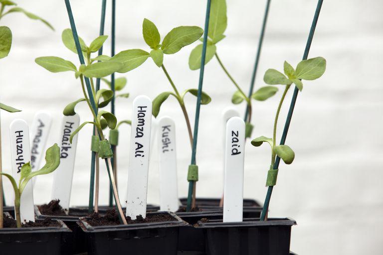 Nombre botánico de las plantas
