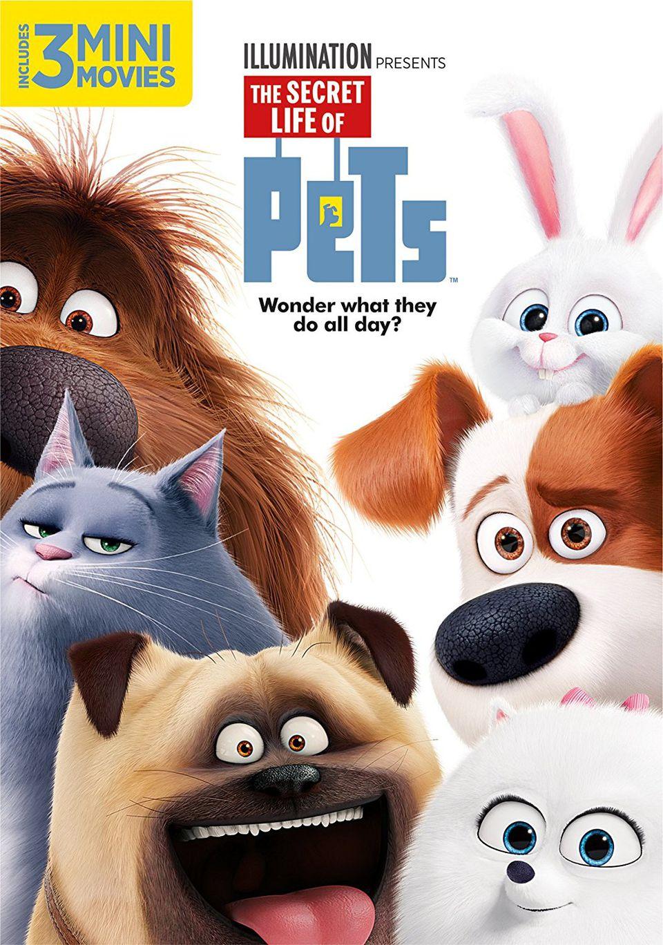 The secret life of pets dog movie