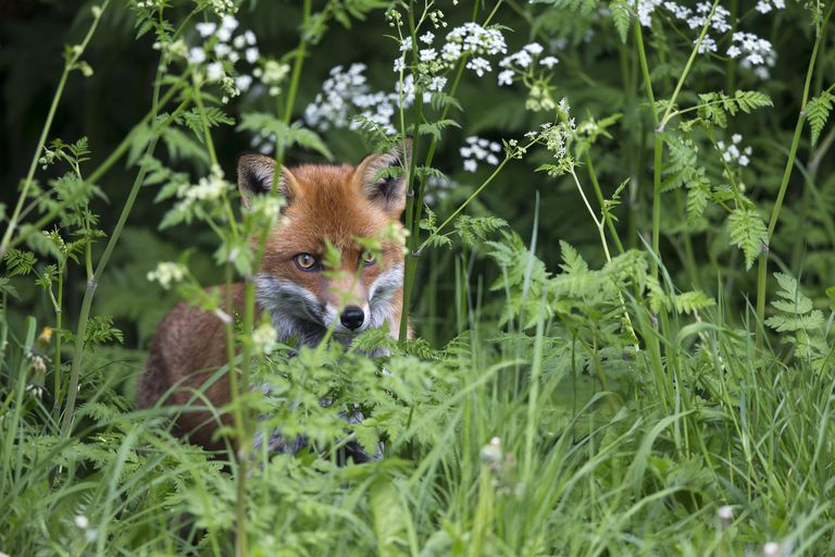 "The Fuchs surname means ""fox,"" often used to describe someone who had red hair or was foxy."