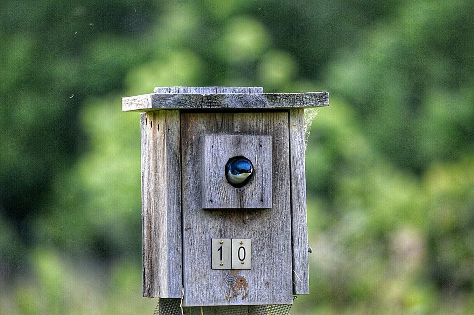 Bird Peeks Out Of Its Birdhouse