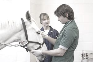Veterinarians with horse