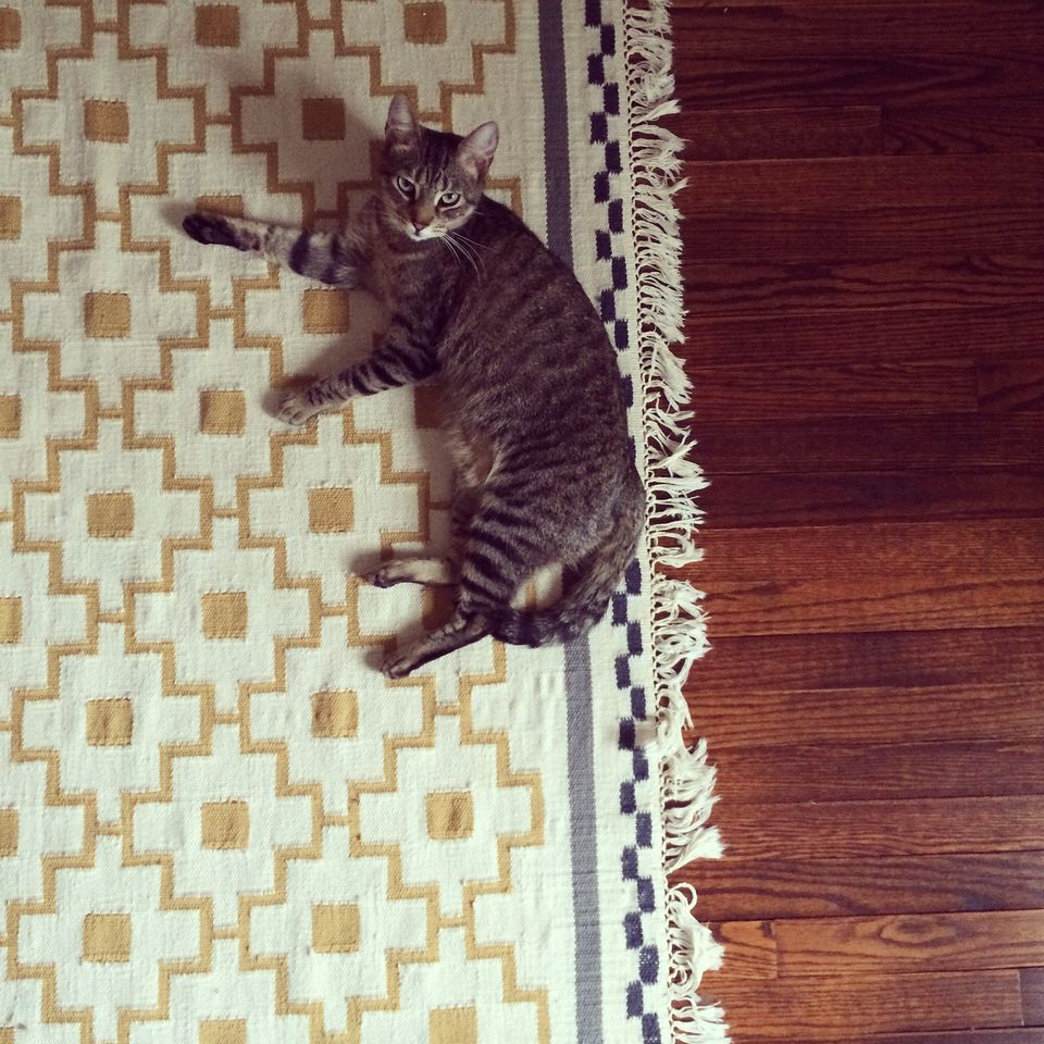 tabby cat on a rug