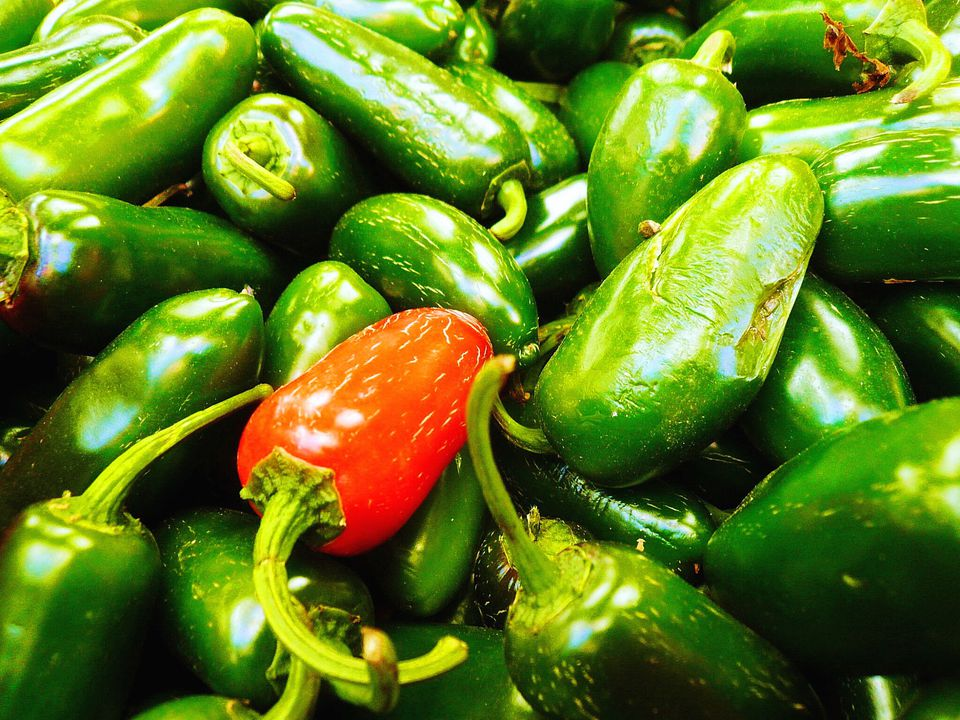 Jalapen Chile Peppers