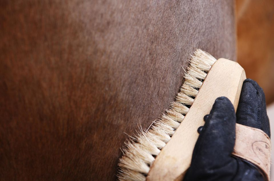 Close-up of horse grooming brush