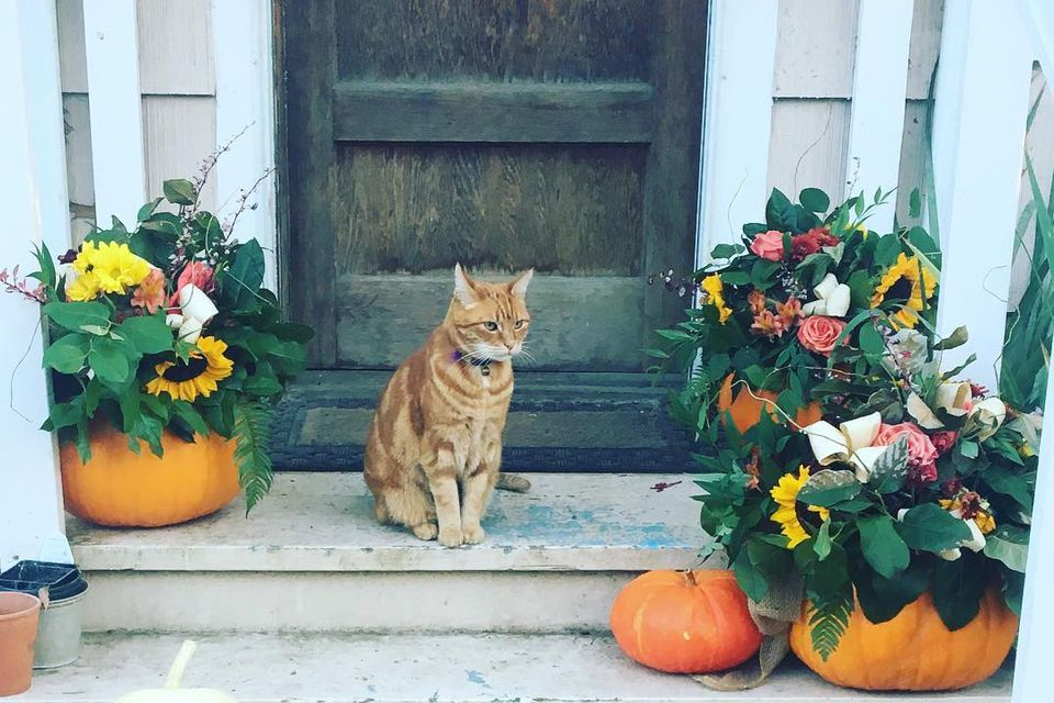 Pumpkin-Vases-Fall-Porch