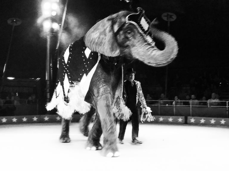 View Of Elephant In Circus