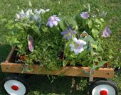 container gardening picture of plants on wagon hardening off