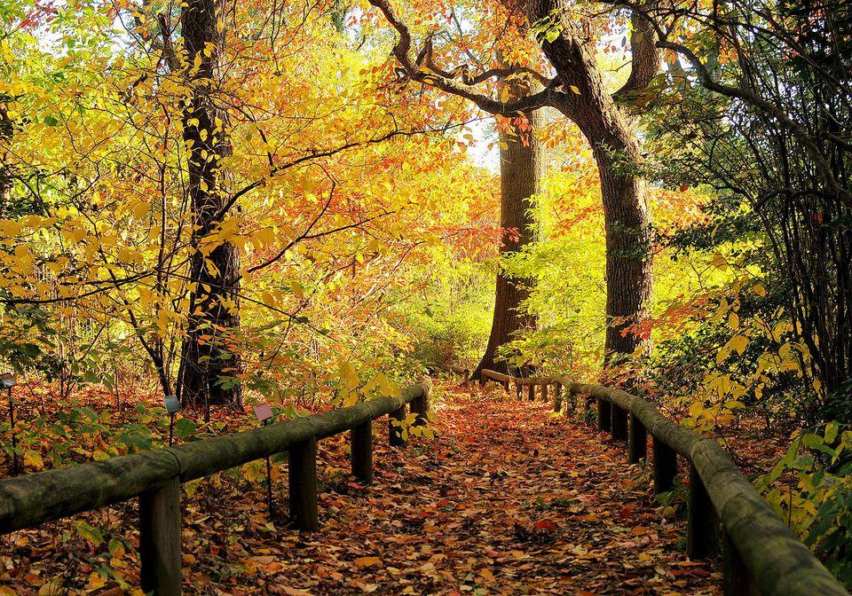 Brooklyn Botanical Gardens path in Autumn