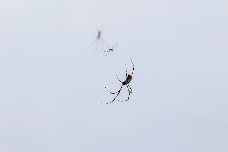 Low Angle View Of Spiders Against Wall