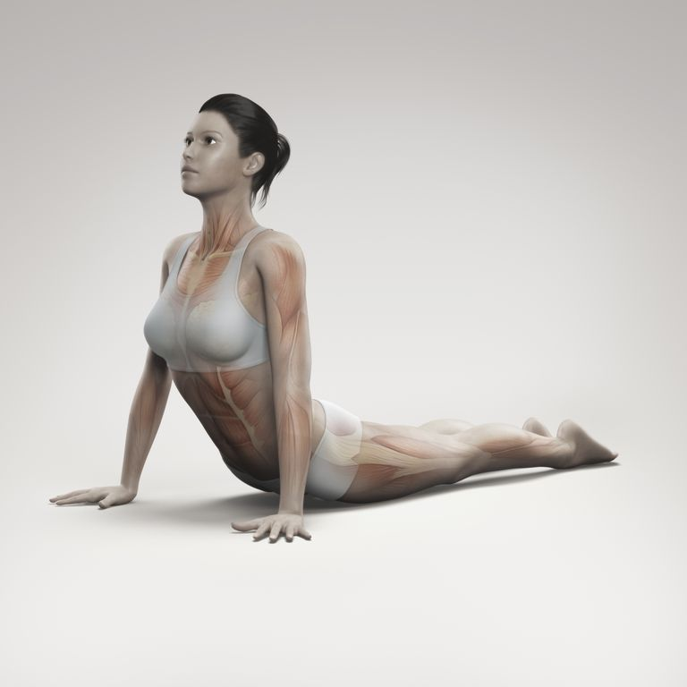 A depiction of yoga cobra with muscles.