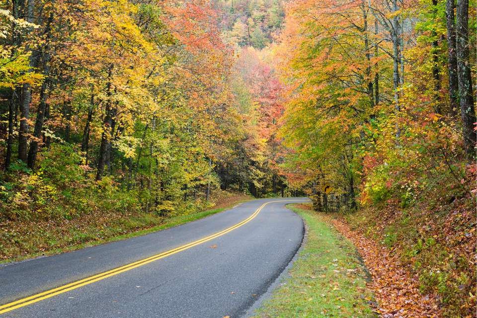 Enjoy the fall foliage of the Smoky Mountains during the Hwy 411 Yard Sale.
