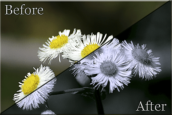 Split Tone and Duotone with Photoshop Elements