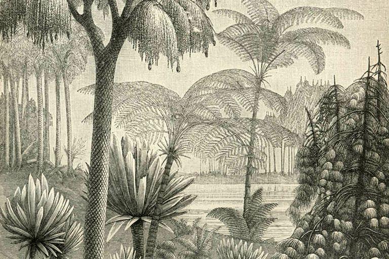 Illustration of Carboniferous Period flora.