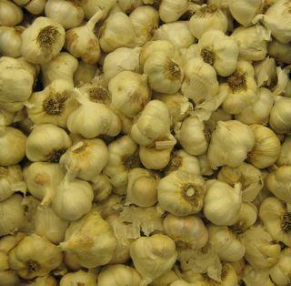 Garlic Knobs
