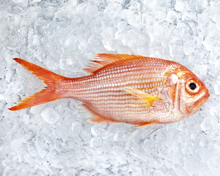 red-snapper-on-ice-by-John-Kuczala:GettyImages.jpg