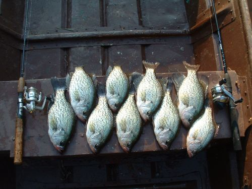 Mess Of Crappie On Jon Boat Seat