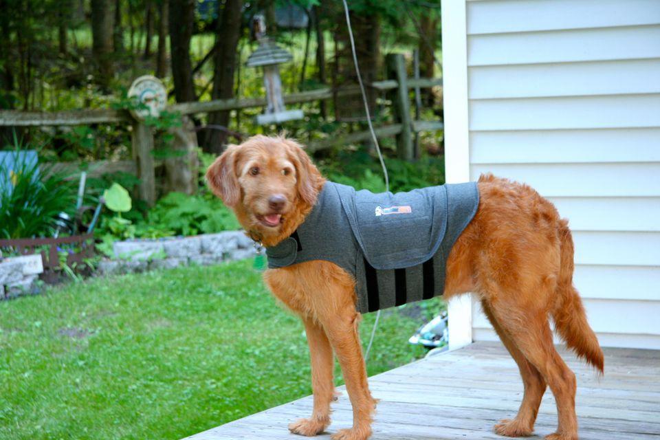 Dog Training Temple Newsam Sunday