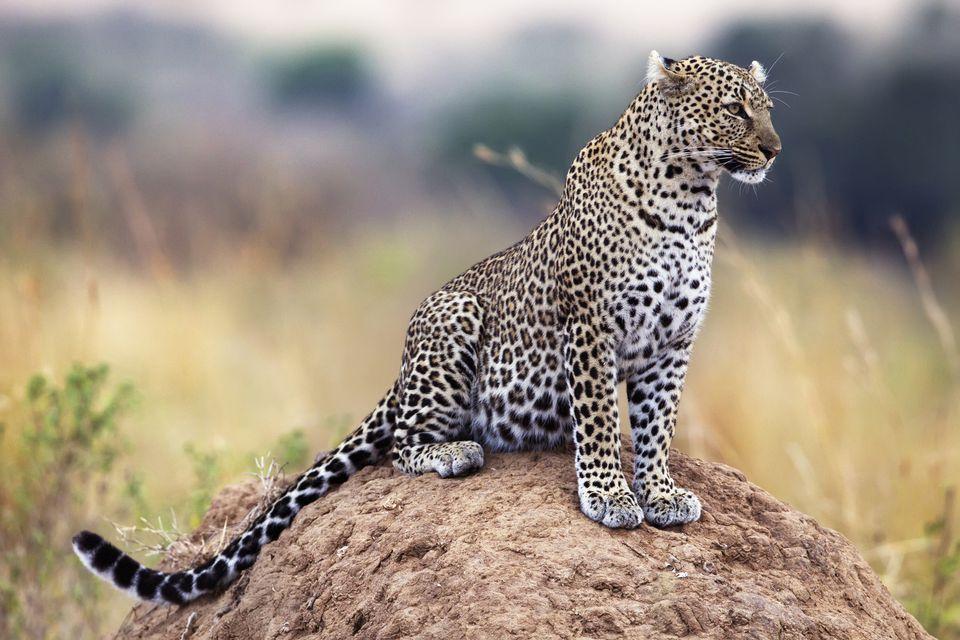 Introducing Africa's Big Five Safari Animals