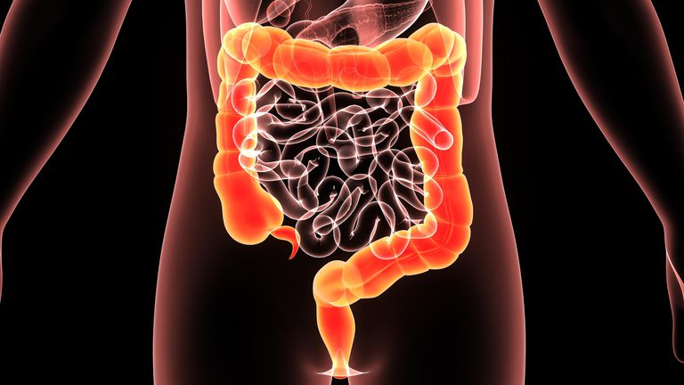human body colon