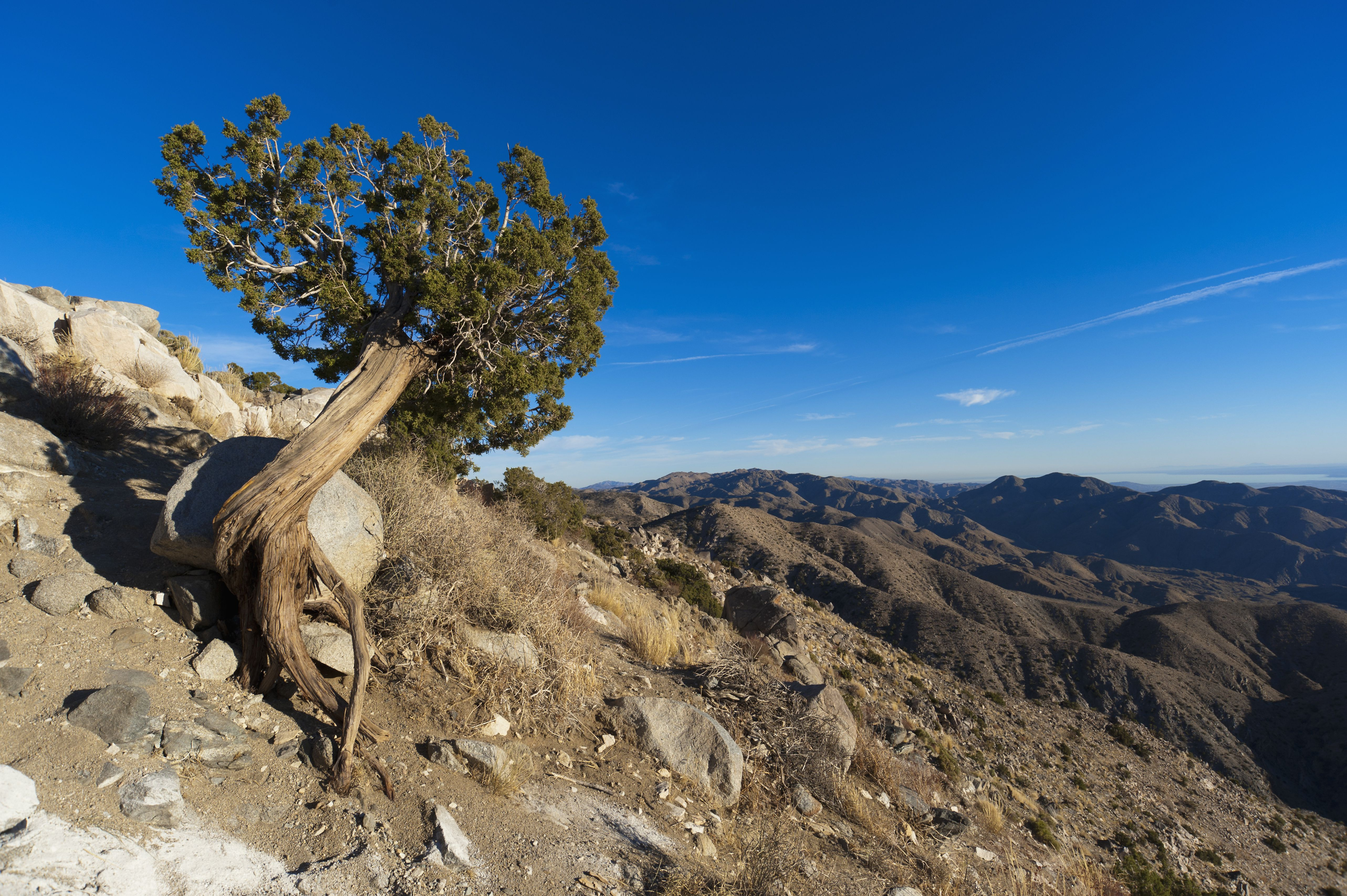 Joshua Tree National Park Proven Tips And Things To Do