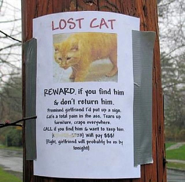 Funny Lost And Found Pet Posters - 20 hilarious lost pet signs
