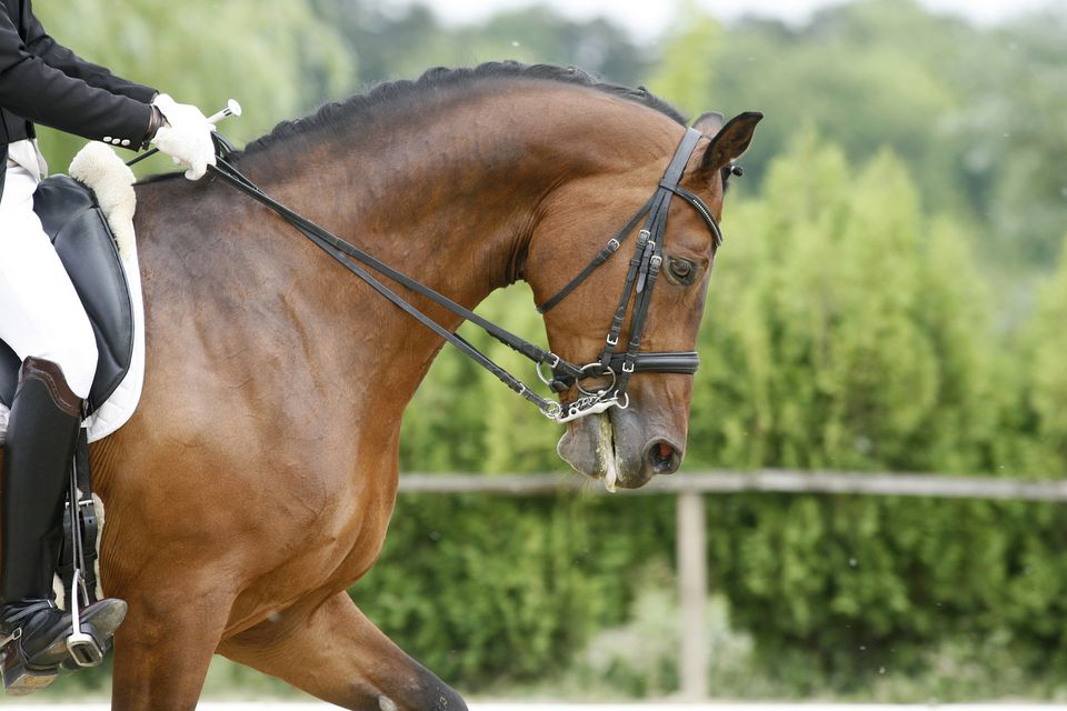 Head of a young dressage horse with unknown rider in action