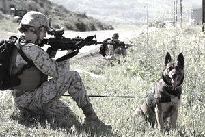 Lance Cpl. Suzette Goddard, military working dog handler,