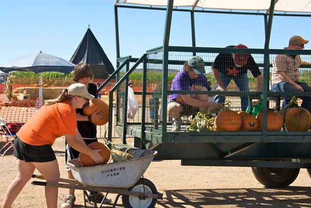 pumpkin-patch-buckelew-03_640.jpg