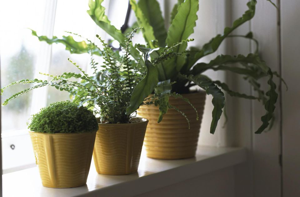 Potted houseplants on windowsill