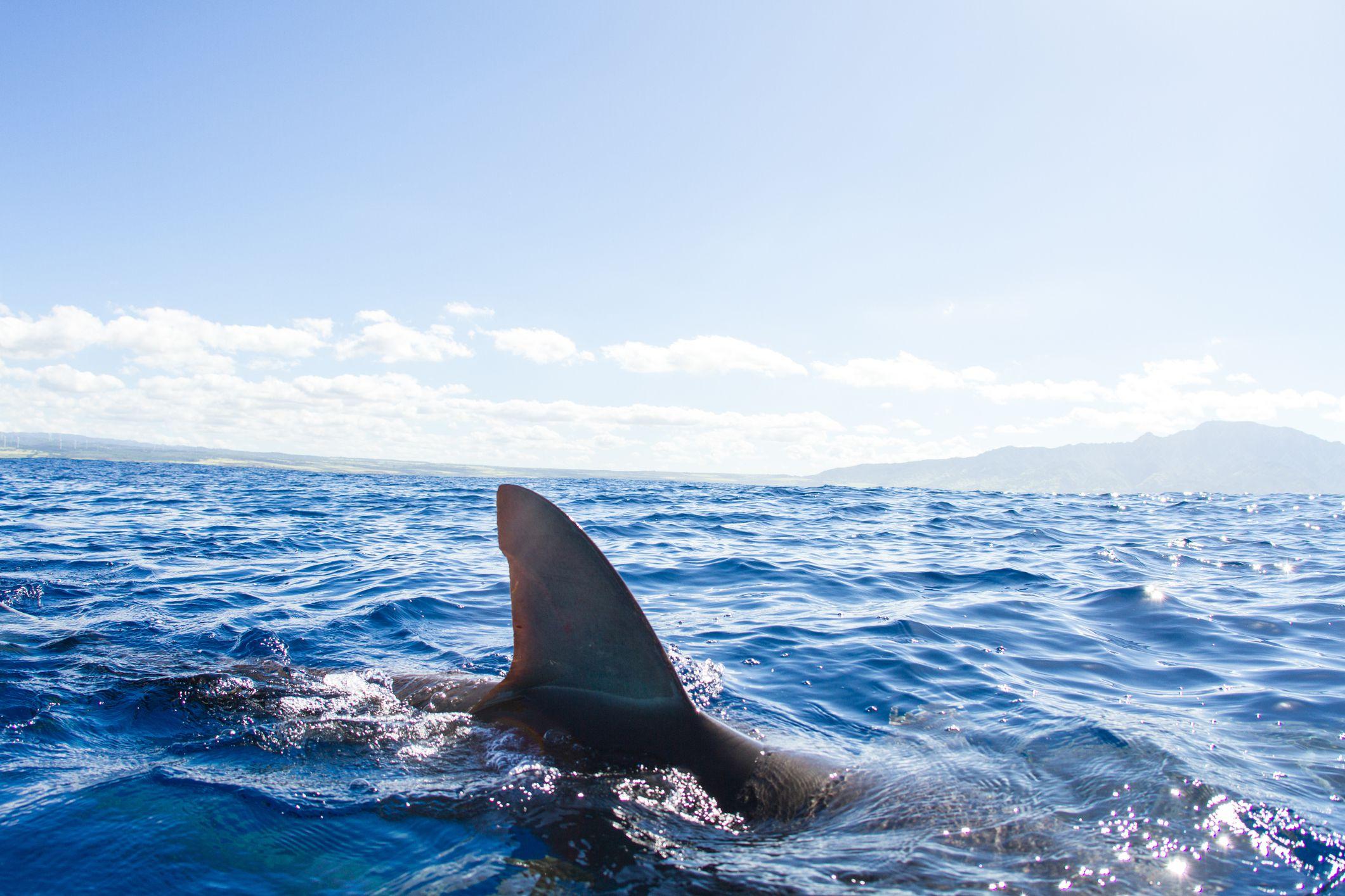 Five Reasons Travelers Shouldn T Fear Sharks