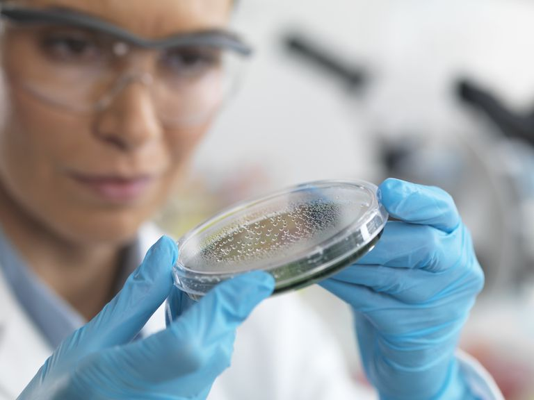 Female scientist examining a petri dish